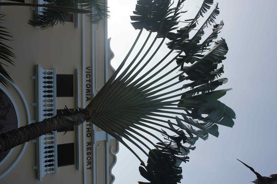 Victoria Can Tho Resort: Travelers Palm in front of resort