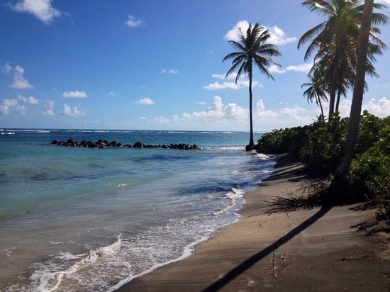 Nisbet Plantation Beach Club: Fun to walk down the beach, collecting coral