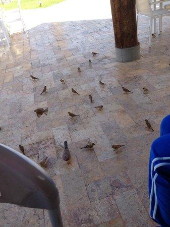 Movenpick Resort & Spa Tala Bay Aqaba: Azure bar