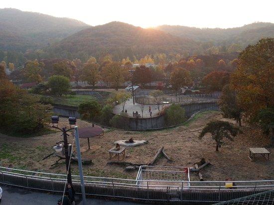 Seoul Grand Park : где-то там внизу - львы