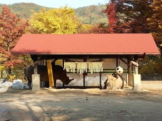 Seoul Grand Park : носорог