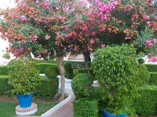 Globales Cortijo Blanco Hotel: lovely little tree