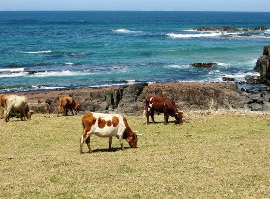 Kob Inn Beach Resort: local 'wildlife'