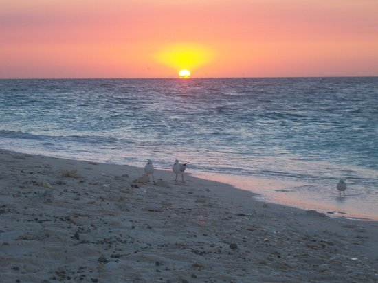 Wilson Island: sunset