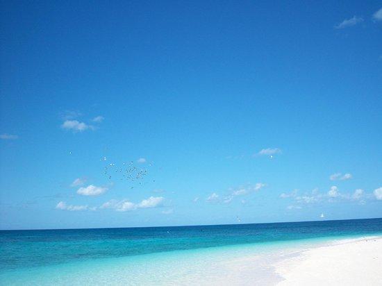 Wilson Island, Australia: views