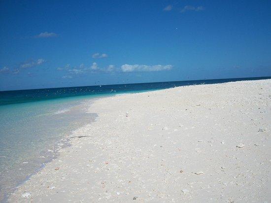 Wilson Island, Australia: beach