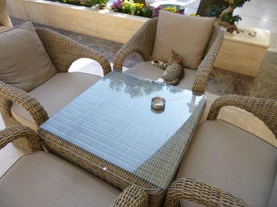 Renaissance Antalya Beach Resort & Spa : Poezen hotel, en er zijn er heel veel van