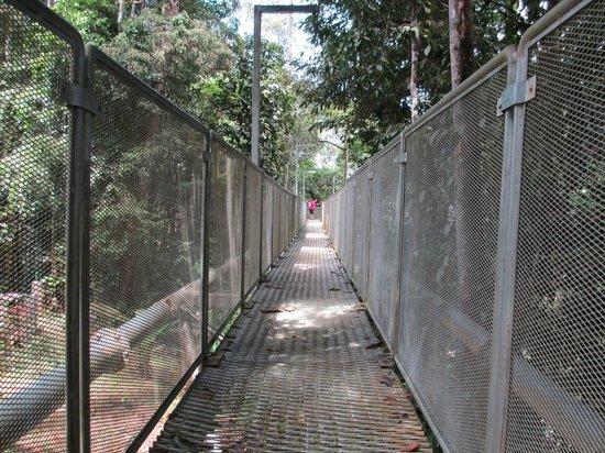 Sungai Sedim Recreational Forest: Galvanised steel