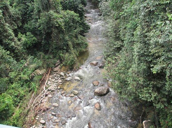 Sungai Sedim Recreational Forest: View from above