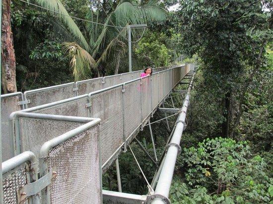 Sungai Sedim Recreational Forest: Tree Top Walk