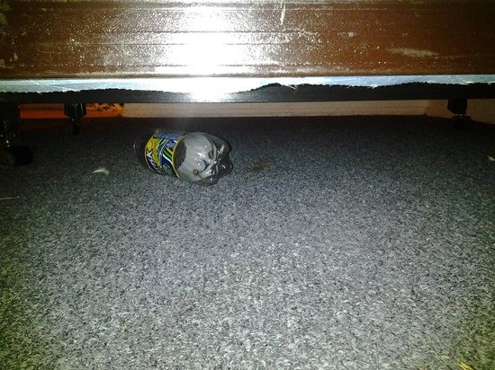 Rodeway Inn : I seen this under bed as I put bags down
