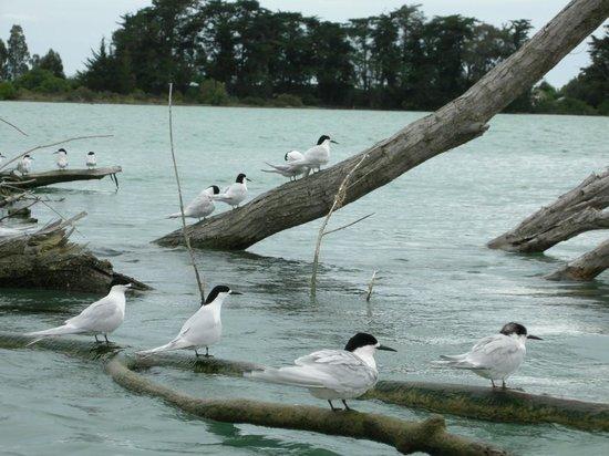 Driftwood Retreat & Eco-Tours: birdwatching