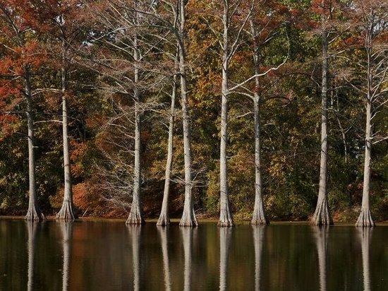 Moore Bayou Recreation Area