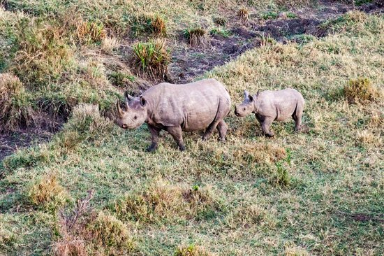 Governors' Camps Hot Air Ballooning: Rhinos