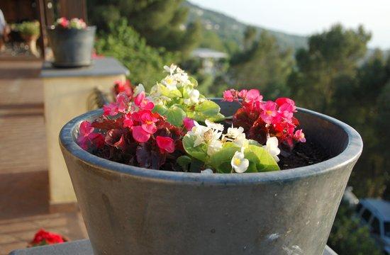 Monte Solaro: цветы на террасе отеля