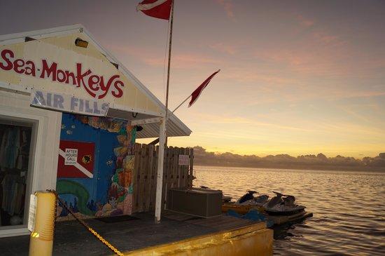 Seamonkey's Scuba Diving: Sunrise over Sea Monkeys!