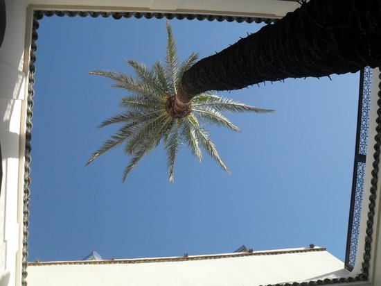 Zamzam Riad: an impressive palm tree grows up the middle of the courtyard...