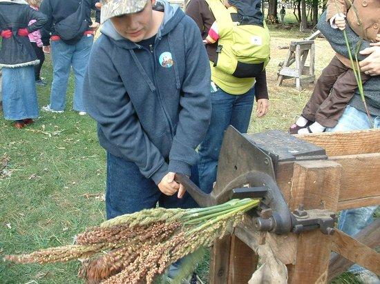 Oliver Kelley Farm: harvesting prairie sugar weekend