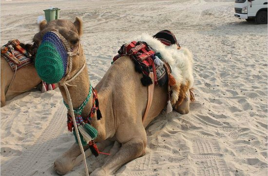 Arabian Adventures Day Tours: Sparky
