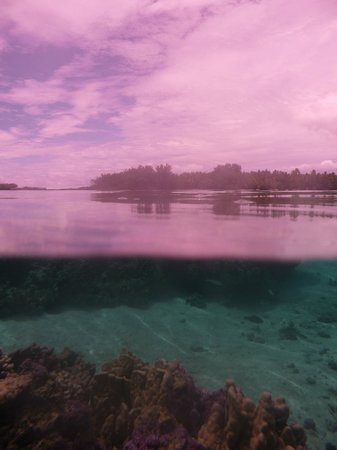Vahine Private Island Resort: snorkeling