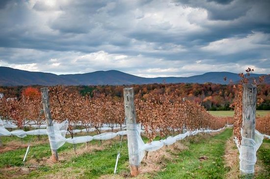 Crozet, VA: Fall view of Stinson Vineyards