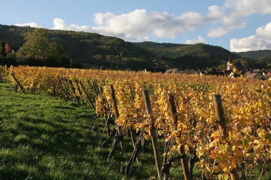 La Diligence : vignes de Riquewhir