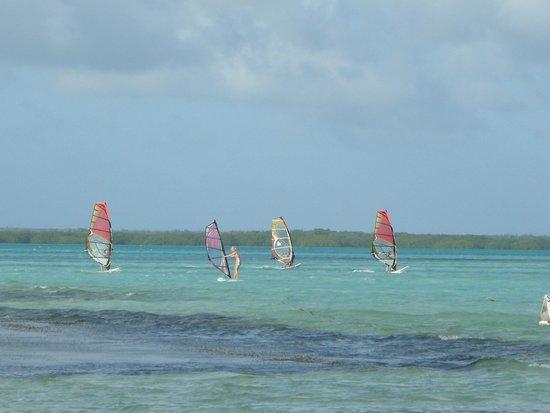 Divi Flamingo Beach Resort and Casino : Wind surfing