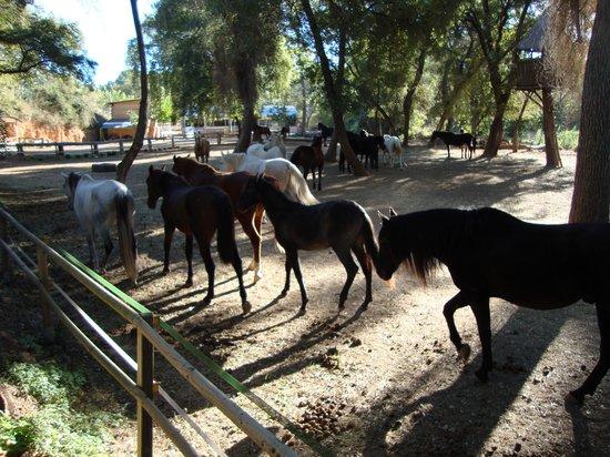 Boutique Hotel & Spa Les Vinyes: Padock con los caballos
