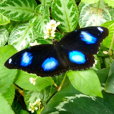 Entopia: Butterfly