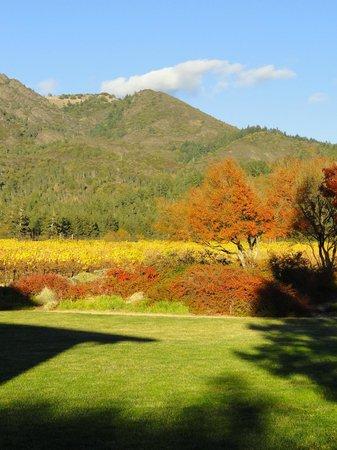 Fall colors at St. Francis Winery & Vineyards
