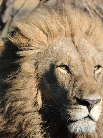 andBeyond Nxabega Okavango Tented Camp : His Majesty