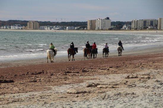 Carousel Horse Farm: October 2013 Girlfriend Beach Ride.....