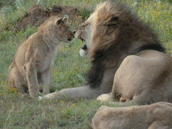 Kariega Game Reserve - Ukhozi Lodge: up close & personal 1