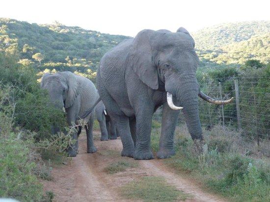 Kariega Game Reserve - Ukhozi Lodge: up close & personal 2