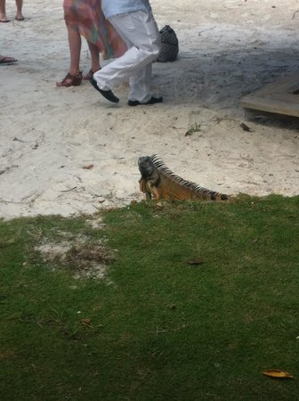 Rock Reef Resort: The Wedding Crasher!  :)