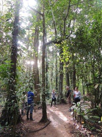 posada amazonas Grupo 1 - mba credicorp ii problemas internos problemas externos matriz bsc análisis del entorno general ideas finales: caso: posada amazonas la empresa rainforest.