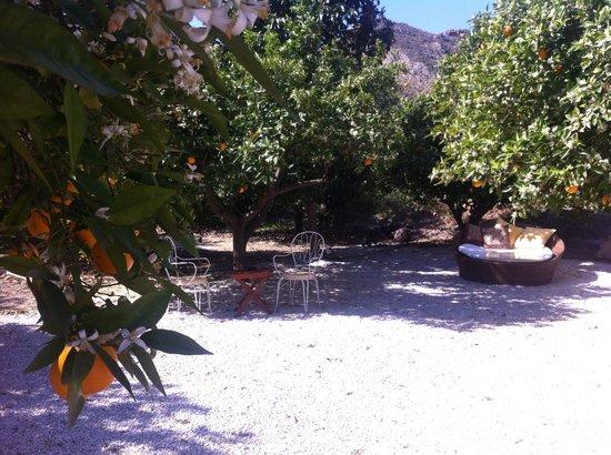 La Joya del Valle de Ricote: outside the cactus