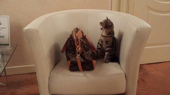 Residenza La Villa : Super Gino il gattino della VIlla