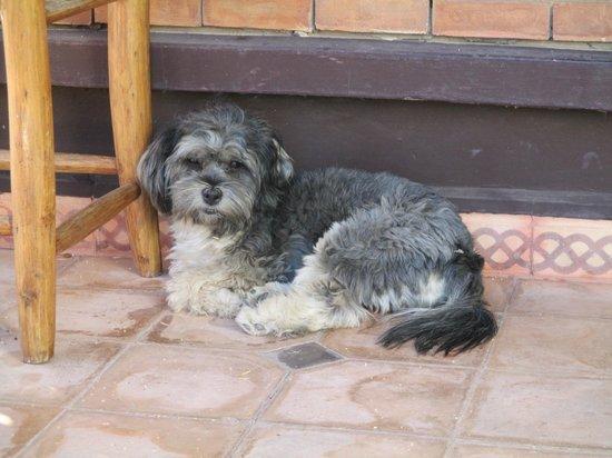 Amani Hôtel Appart : Hotel's friendly dog