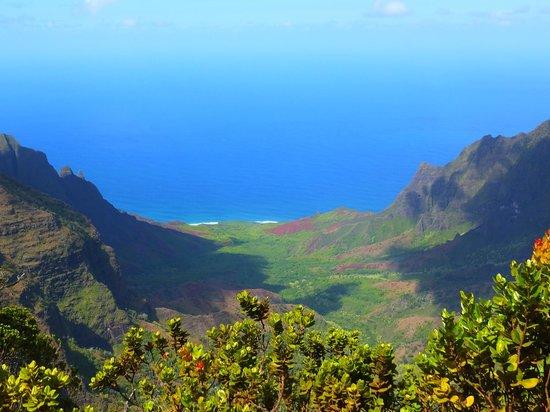 Puuo Kila: View from the Pihea Trail