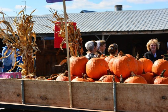 The Green Dragon Farmer's Market : Ridiculously cheap pumpkins for sale