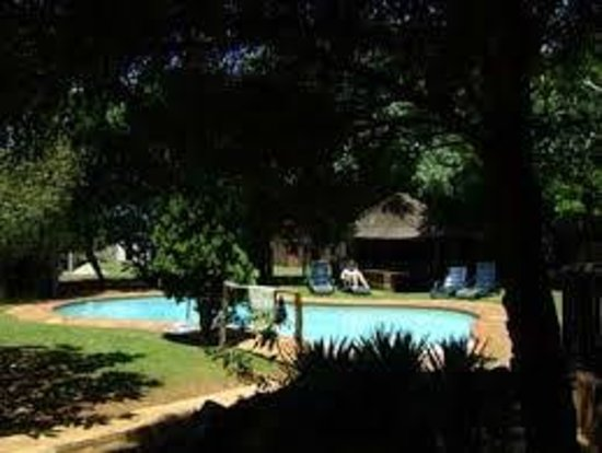 Mufasa Backpackers : Pool