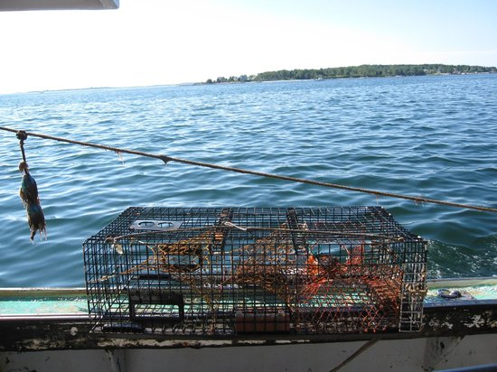 Lobster Boat Tour w/ Captain Clive Farrin: Lobster Trap!