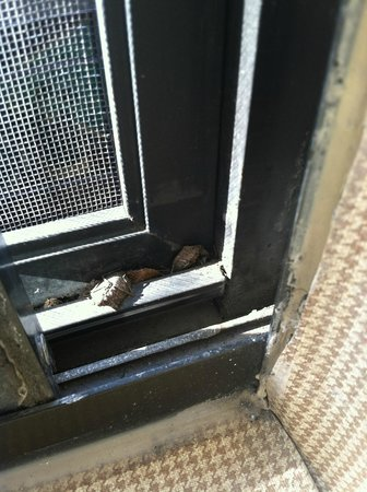 Sheraton Harrisburg-Hershey : Dead carcasses of the insects that flew in through a whole in the window screen!