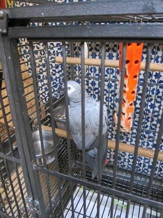 Riad Al Bartal : Poulette the parrot