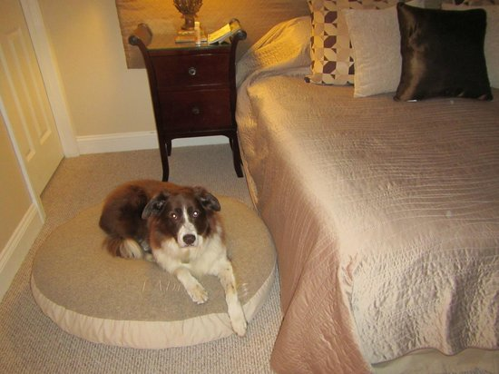 Glynn House Inn: Plush dog bed in the Lincoln Apartment