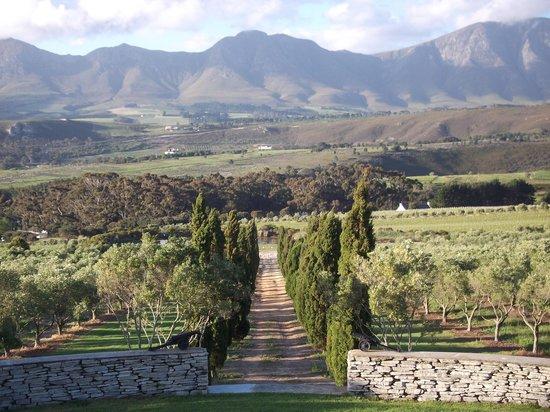 Go Cape Tours: Hamilton Russell Estate