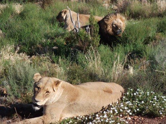 Go Cape Tours: Aquilla Game Reserve