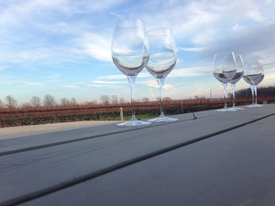Niagara Vintage Wine Tours: Stonebrook Organic Winery- Patio view of vineyards