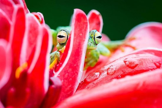 Frogs Heaven: hide and seek